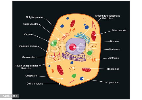 what is a real life example of mitochondria
