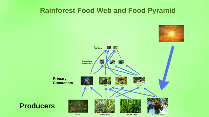 tropical rainforest food chain example